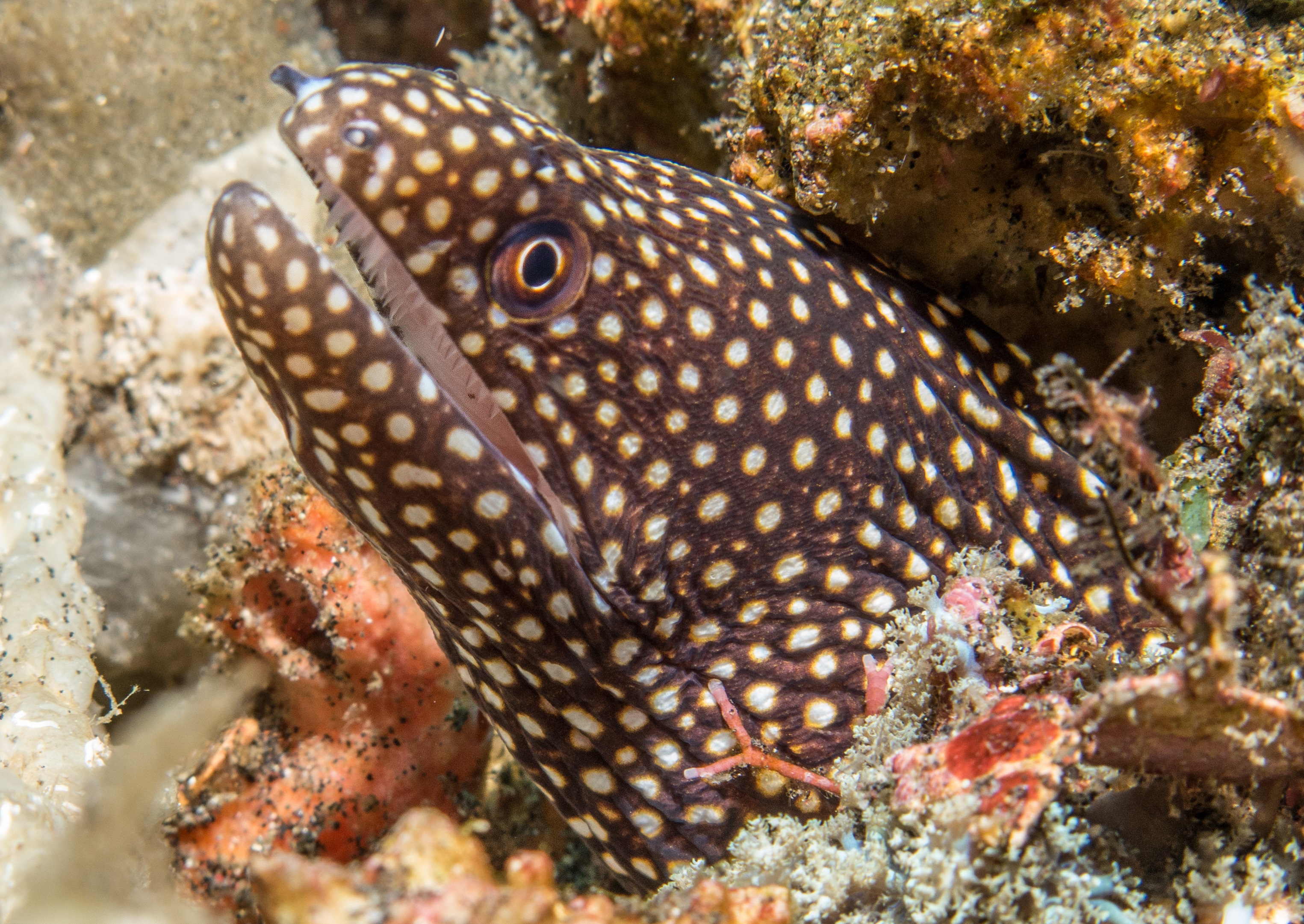 Moray eel at dive site Turtle Point